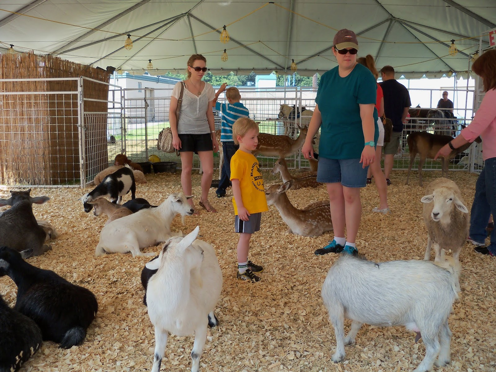 Fort Bend County Fair 2015 - 100_0193.JPG