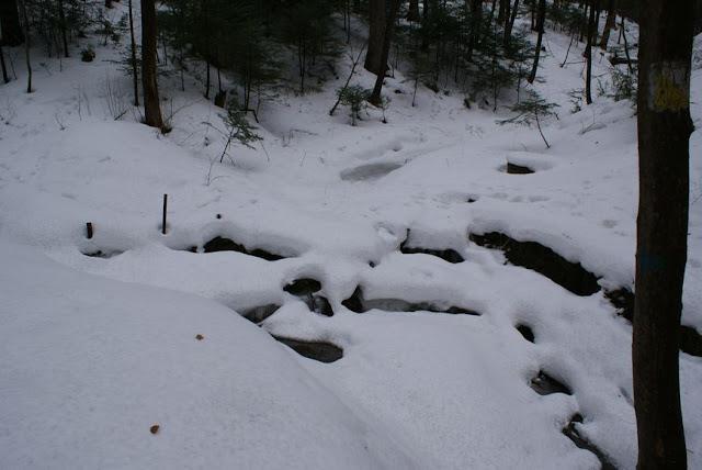 Zajęcia terenowe 29 lutego 2012 - DSC06188_1.JPG