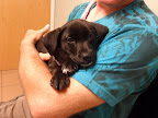 Macy-Keefe-FB-veterinarian-Sandown-NH-dog.jpg
