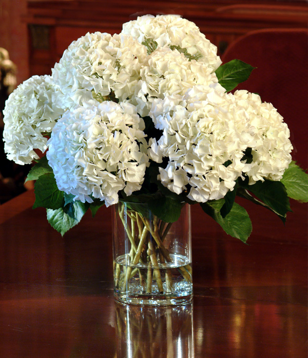 Wedding White Hydrangea
