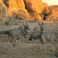 Tuli Block - Kudu