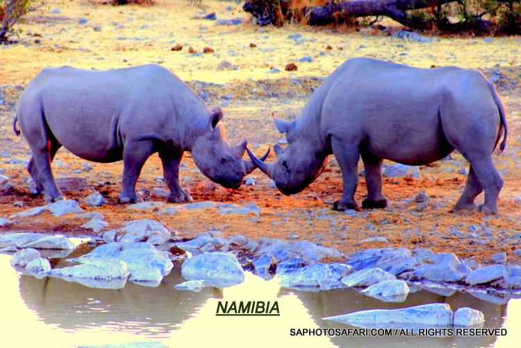 2011 Burundi Cheap Sale Rhinoceros Stamp Sheet #5 Of 5 african Black Rhino Clients First