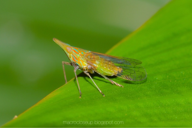 Macro photo - Insect