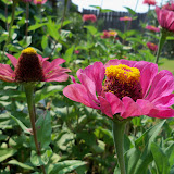 Gardening 2011 - 100_9354.JPG