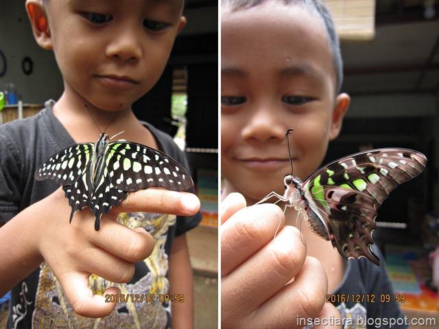 iyas dan Kupu-kupu Tailed Jay (Graphium agamemnon)