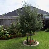 Gardening 2010, Part Three - 101_5262.JPG