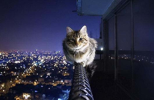 iz_cat4