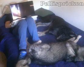 Photo: Å här ligger jag och uppdaterar bloggen
