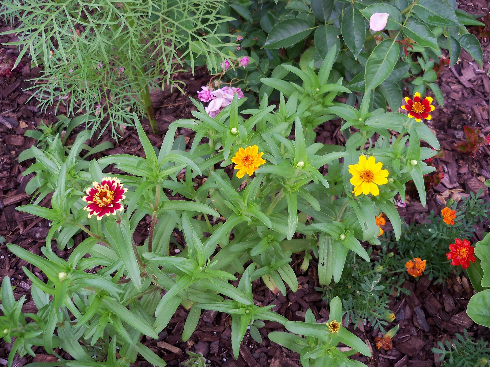 Gardening 2010, Part Two - 101_2445.JPG