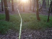 Identifying Trail Path