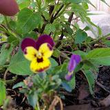 Gardening 2011 - 100_6869.JPG