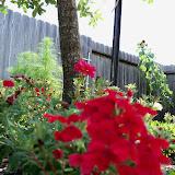 Gardening 2010, Part Three - 101_3832.JPG