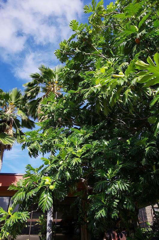06-19-13 Hanauma Bay, Waikiki - IMGP7459.JPG