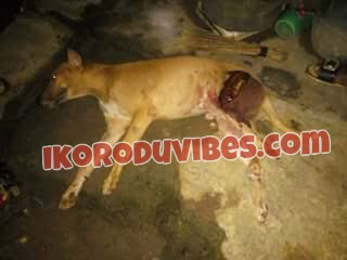 Ikorodu News! Dog Stopped Badoo Gang Attack In Ikorodu, Almost Got Killed  (Photos)