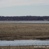 01-19-13 Hagerman Wildlife Preserve and Denison Dam - IMGP4064.JPG