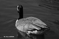 D_S_B_ParkerR_Off a Duck's Back.jpg