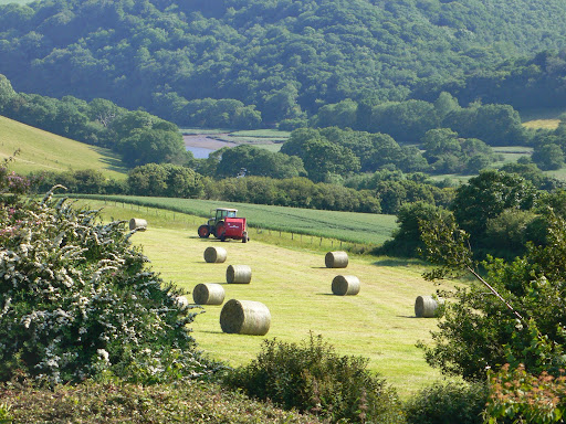 Summer Harvesting, Lostwithiel Valley
