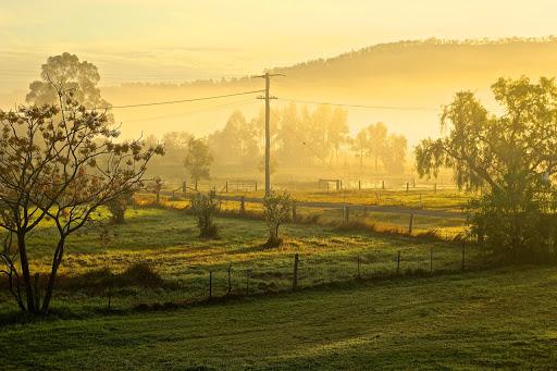 Morning mist in Broke, Australia