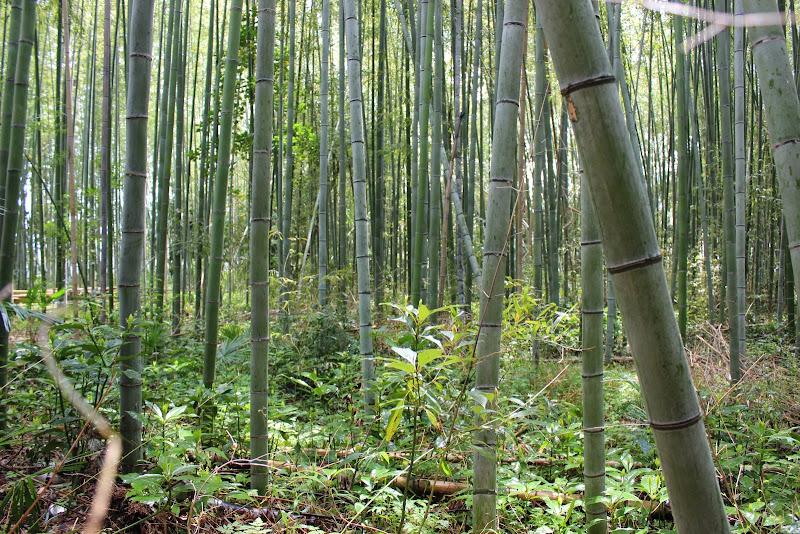 2014 Japan - Dag 8 - marjolein-IMG_1068-0029.JPG