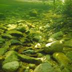 Vista submarina del manglar