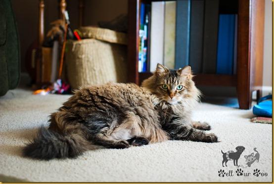 Matilda FF April 20th (©Bell Fur Zoo)