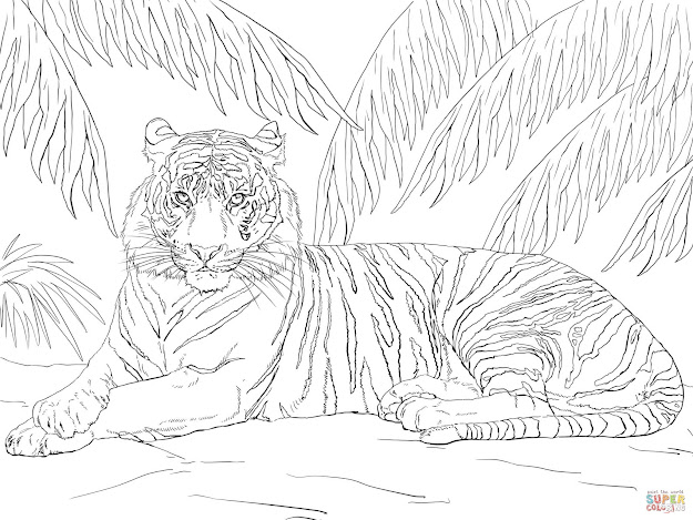 Click The Sumatran Tiger Laying Down Coloring Pages