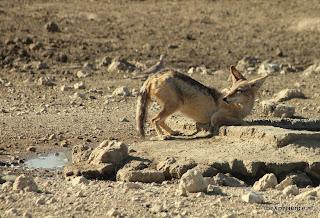 Botswana Kgalagadi