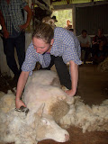 Marina shearing a sheep (© 2010 Bernd Neeser)