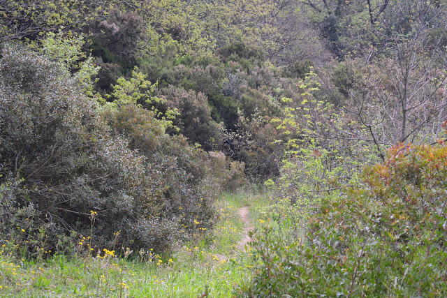 Biotope de Zerynthia cassandra. Parco Naturale Monti Livornesi, 11 avril 2014. Photo : L. Voisin
