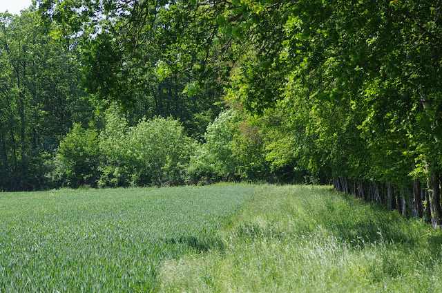 Les Hautes-Lisières (Rouvres, 28), 25 mai 2012. Photo : J.-M. Gayman