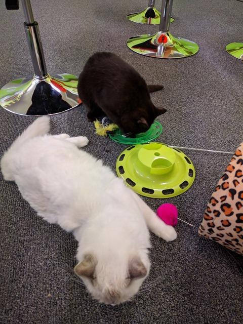 P17_NZ NI Rotorua Cat Cafe_2018-06-13_Jen_IMG_20180614_101805