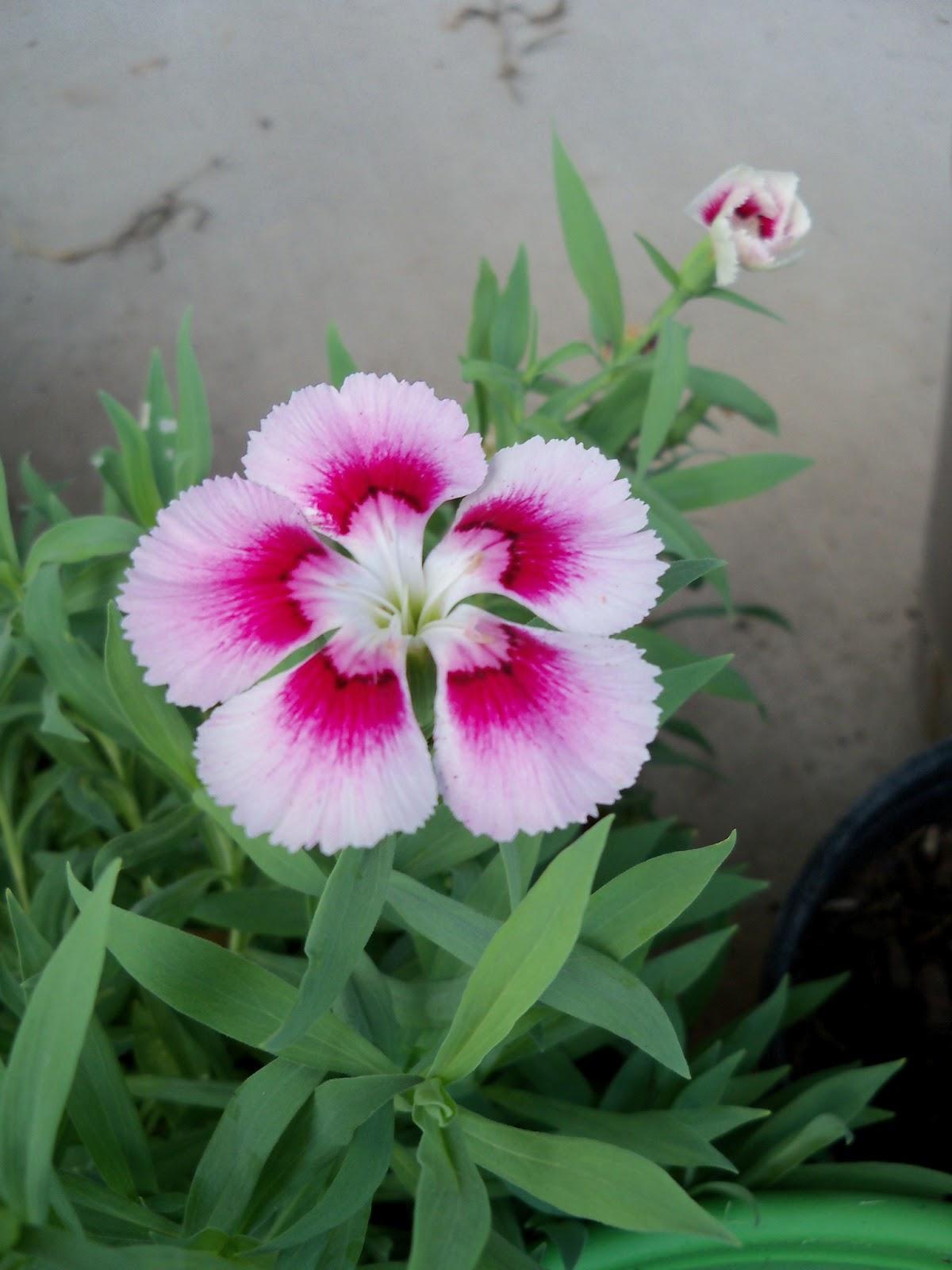 Gardening 2011 - 100_0140.JPG