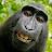 Karamat Adeel avatar image