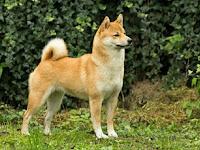 Seekor Anjing Bernama Moris
