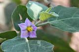 flower (1).jpg