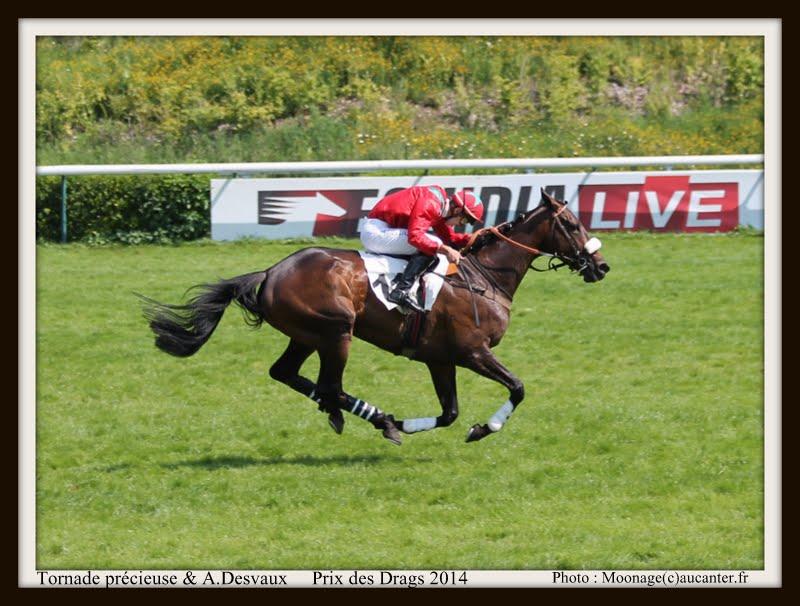 Photos Auteuil 8-06-2014  IMG_1810