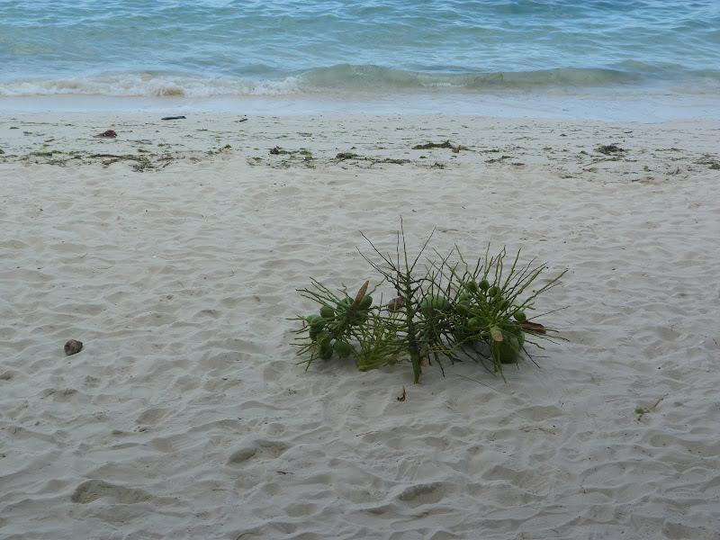 Panglao island, Alona beach