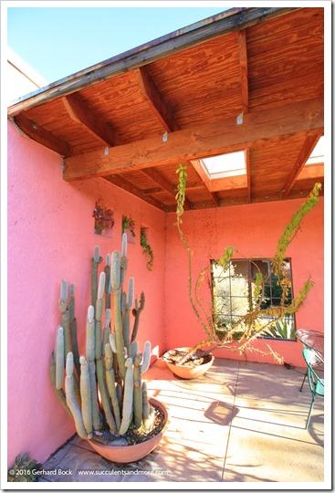 151230_Tucson_Tohono-Chul-Park_0037