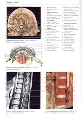 218 Medula Espinal