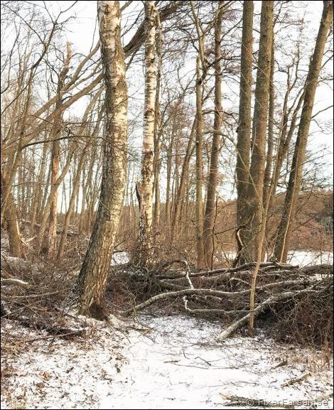 omkullblåsta-träd-över-gångvägar