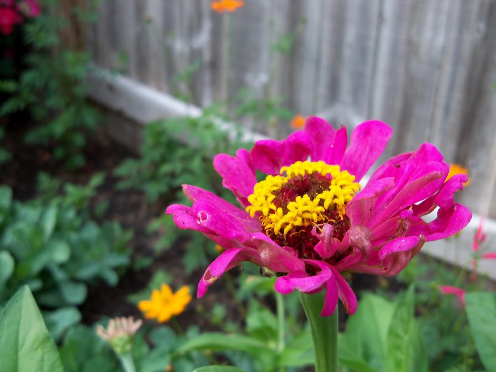 Gardening 2011 - 100_8104.JPG