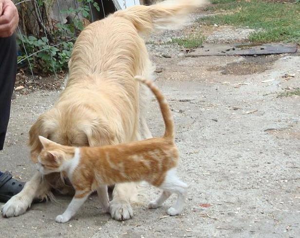 друзья собака и кот