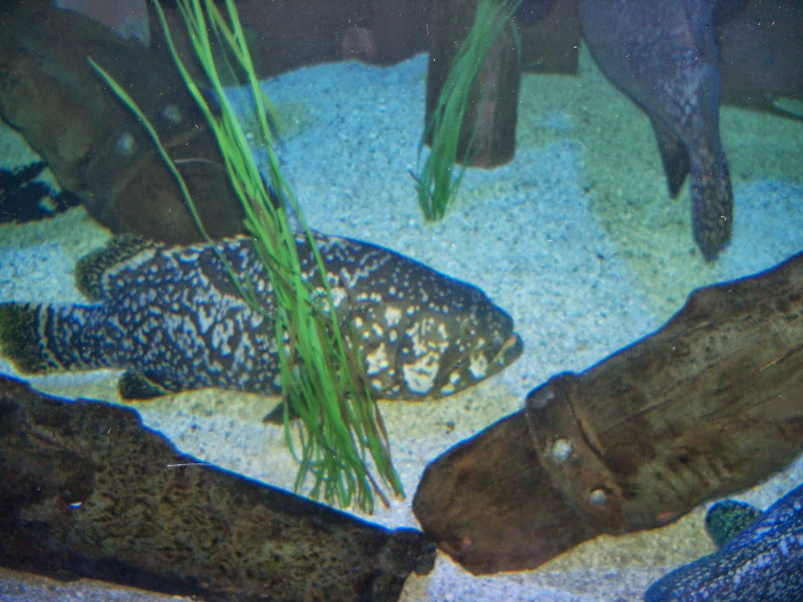 Downtown Aquarium - 116_3988.JPG