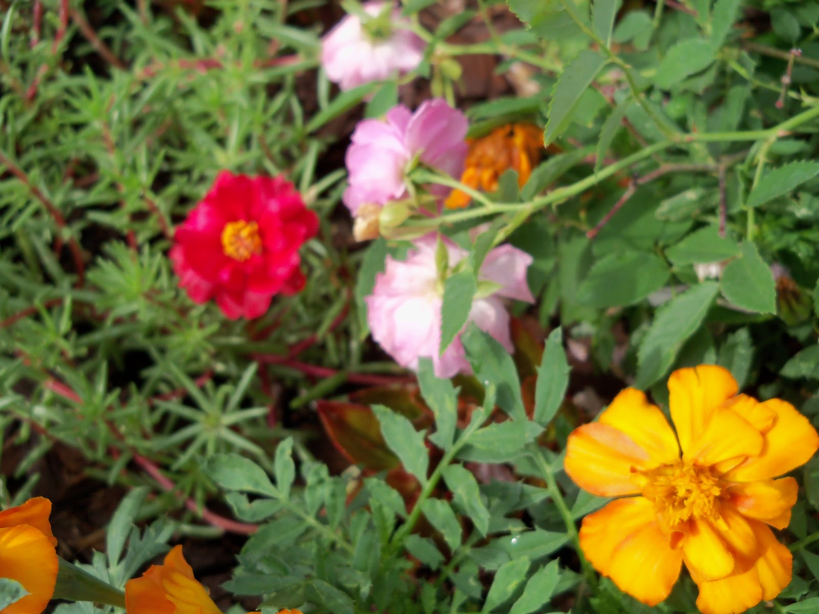 Gardening 2010, Part Two - 101_2182.JPG
