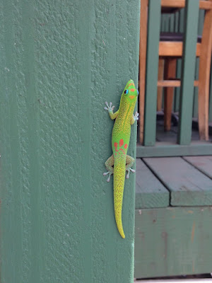 Gecko at Big Island