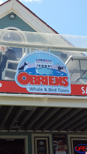 Want to go whale watching in Newfoundland? Head to Bay Bulls, and O'Brien's.