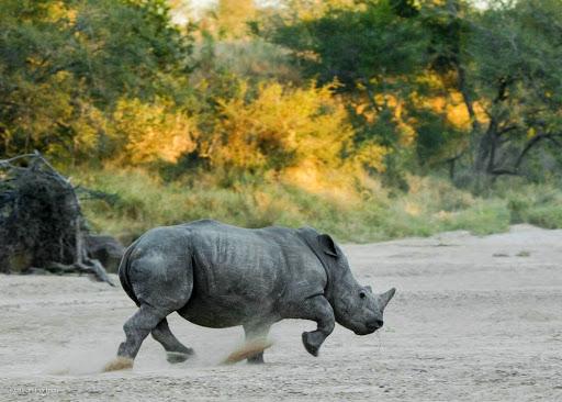 Rhinos. Photo by Susan Portnoy, the Insatiable Traveler