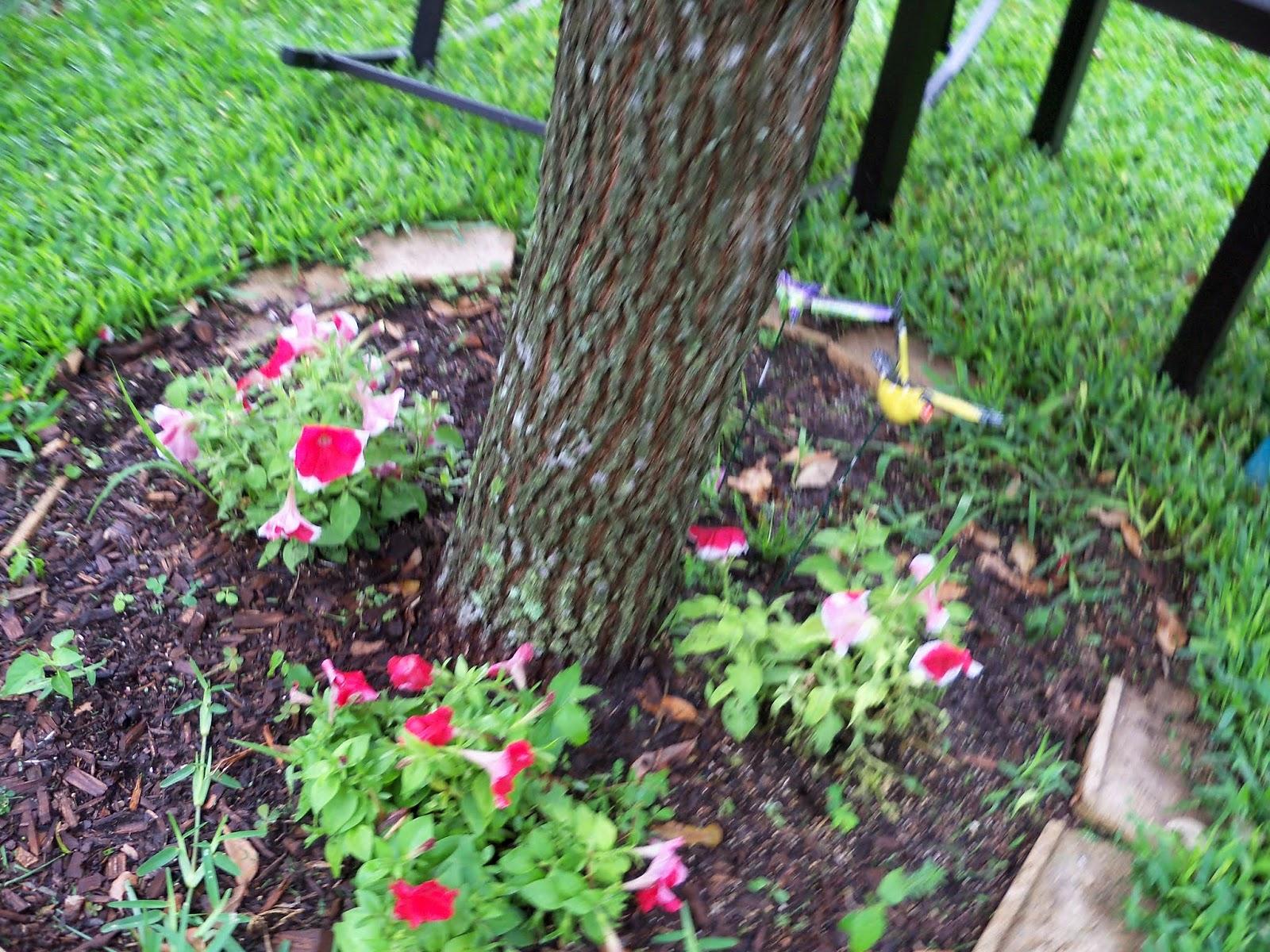Gardening 2014 - 116_2620.JPG