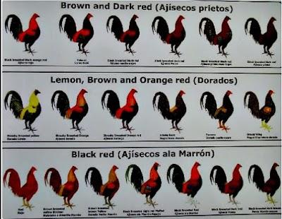 colores de gallos.jpg