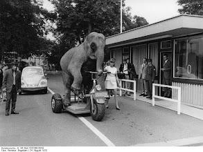 Photo: Radfahrender Elefant des Zirkus Krone vor dem Bundeskanzleramt